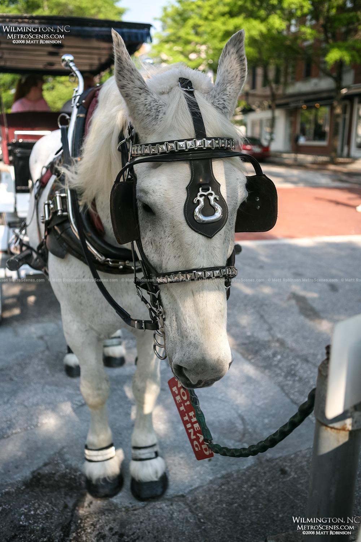 Wilmington Horse