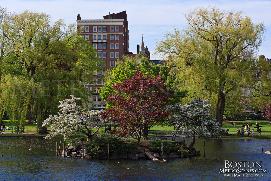 Public Garden island in Boston