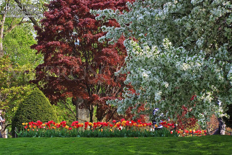 Spring day in Boston