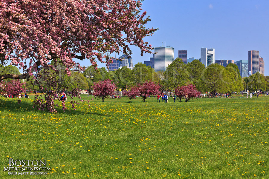 Joe Moakley Park in bloom with skyline