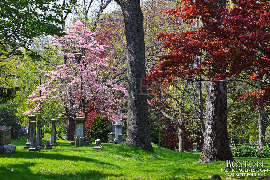 Spring time at Mt. Auburn Cemetery