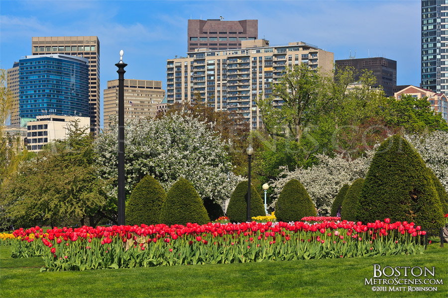 Spring season in downtown Boston
