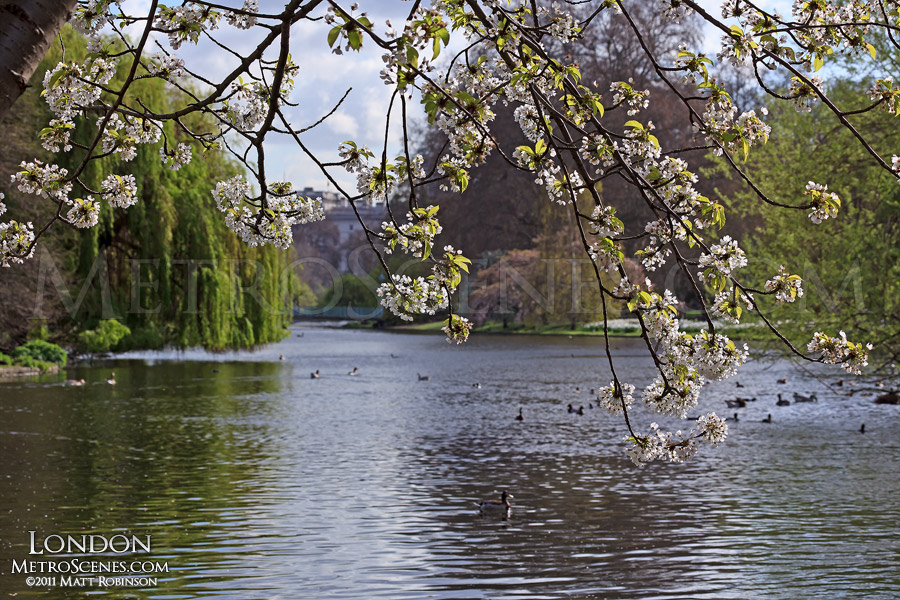 St. James's Park during spring