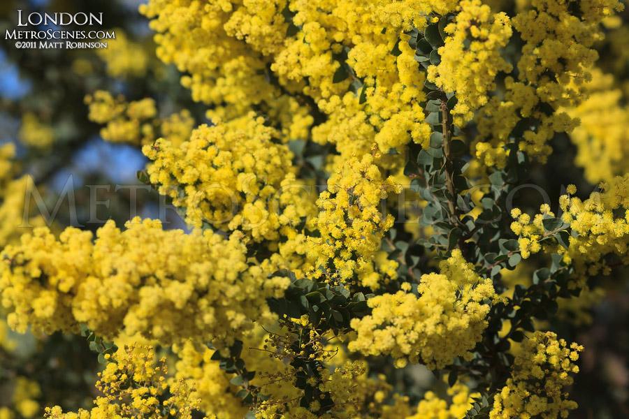 Spring blooms in London