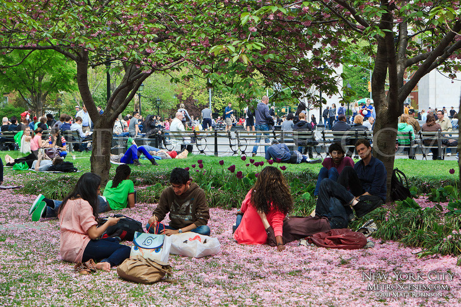 Springtime in Washington Square Park