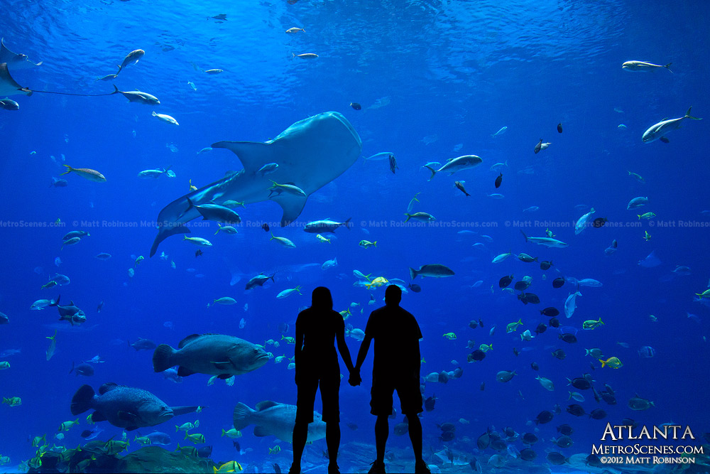Silhouette of couple viewing the Georgia Aquarium marine life