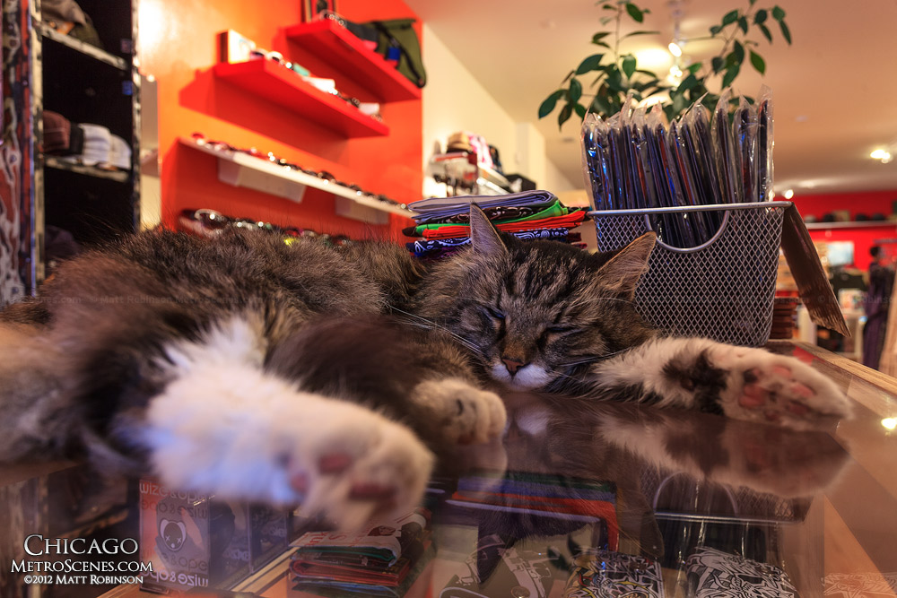 Shop cat at Futuregarb - Wicker Pack