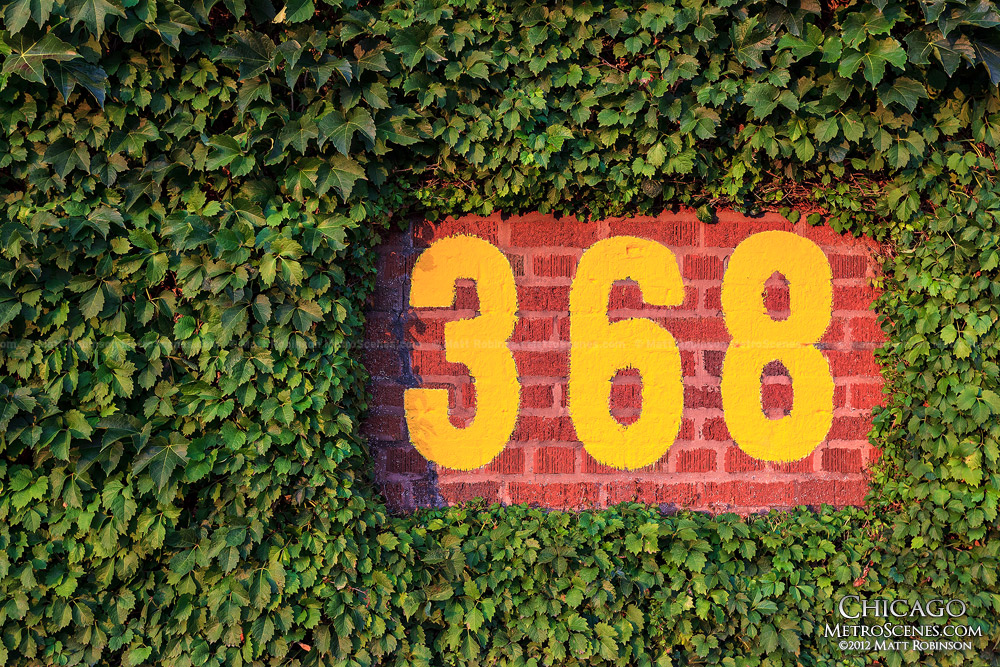 368 foot sign in the Wrigley outfield ivy