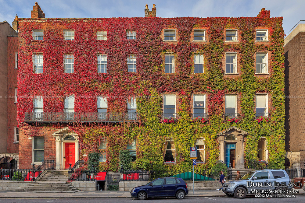Red and green ivy covers brick in Dublin