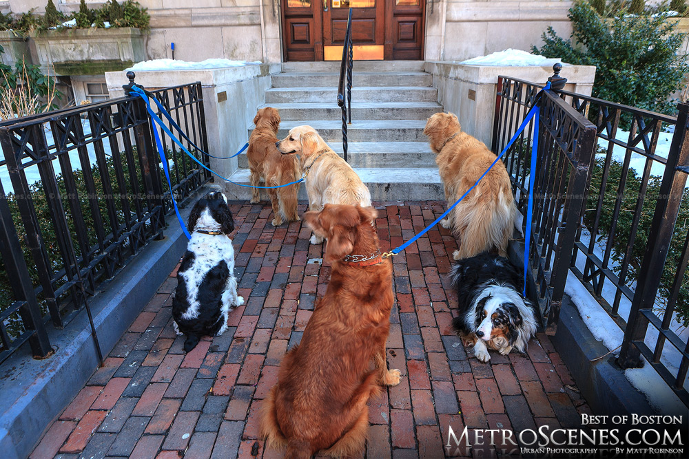 Dogs in Back Bay