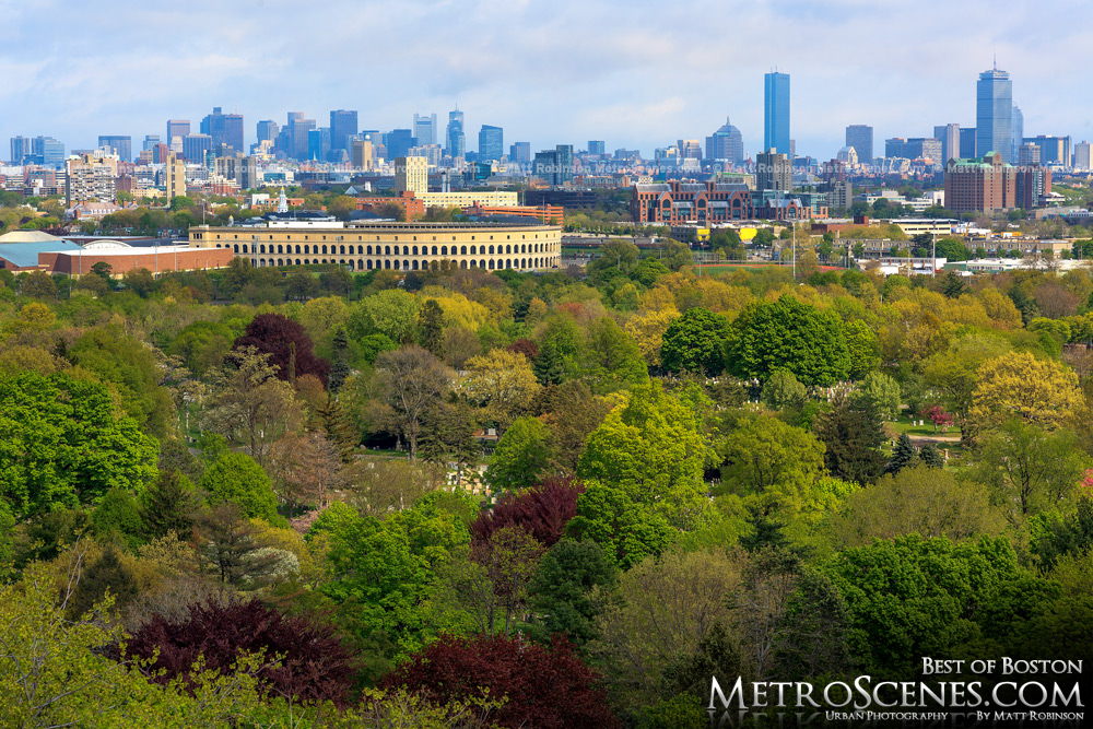 Boston skyline from the Mt. Auburn Cemetery