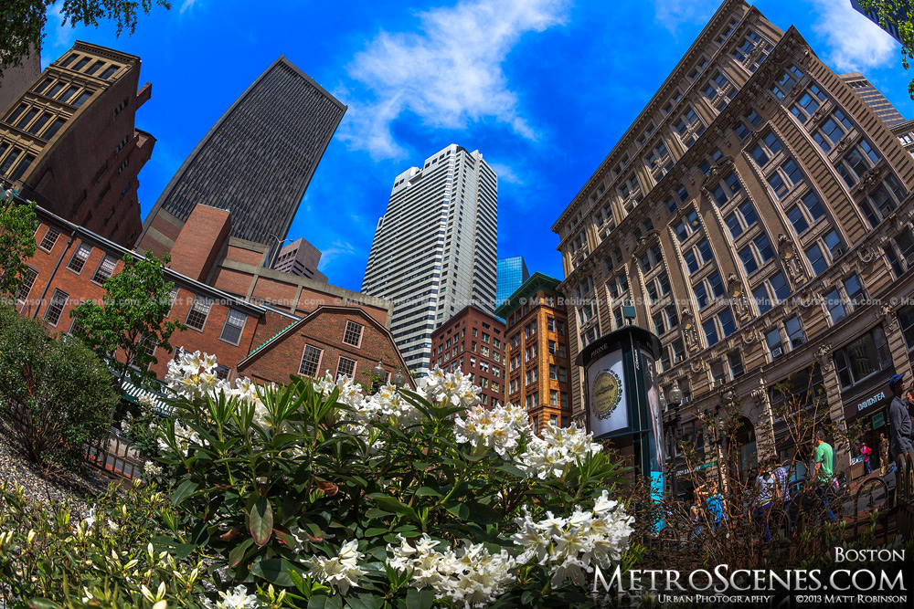 Spring blooms from the Irish Famine Memorial