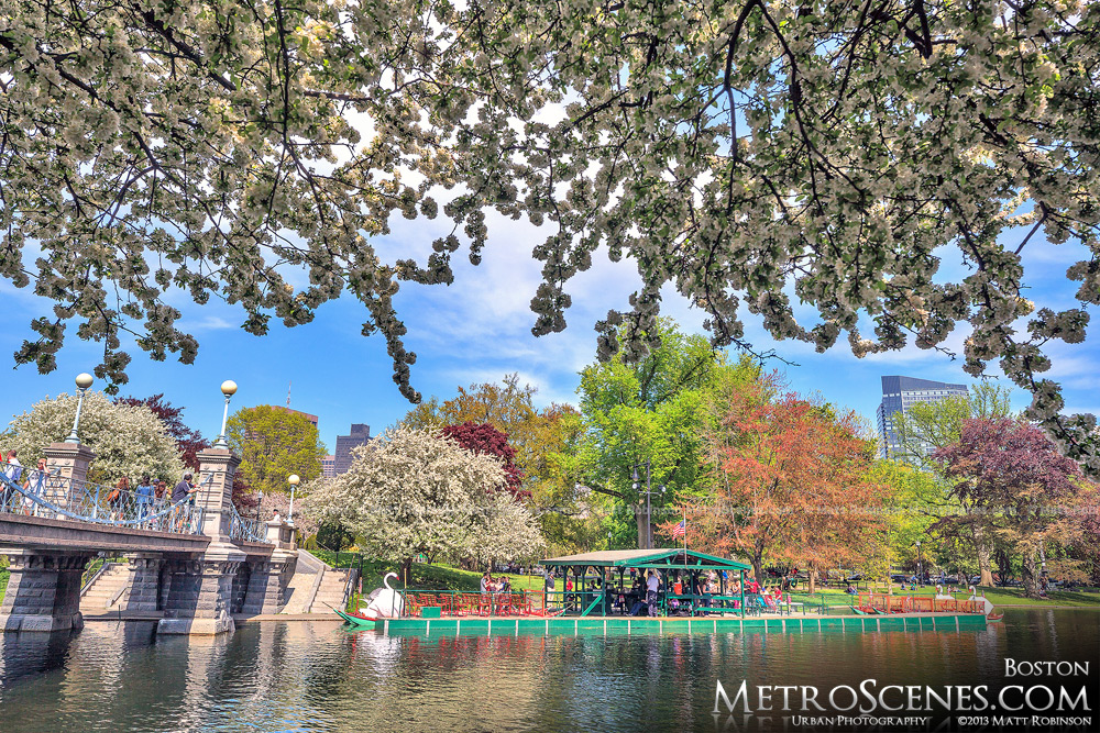 Spring at the Public Garden in Boston