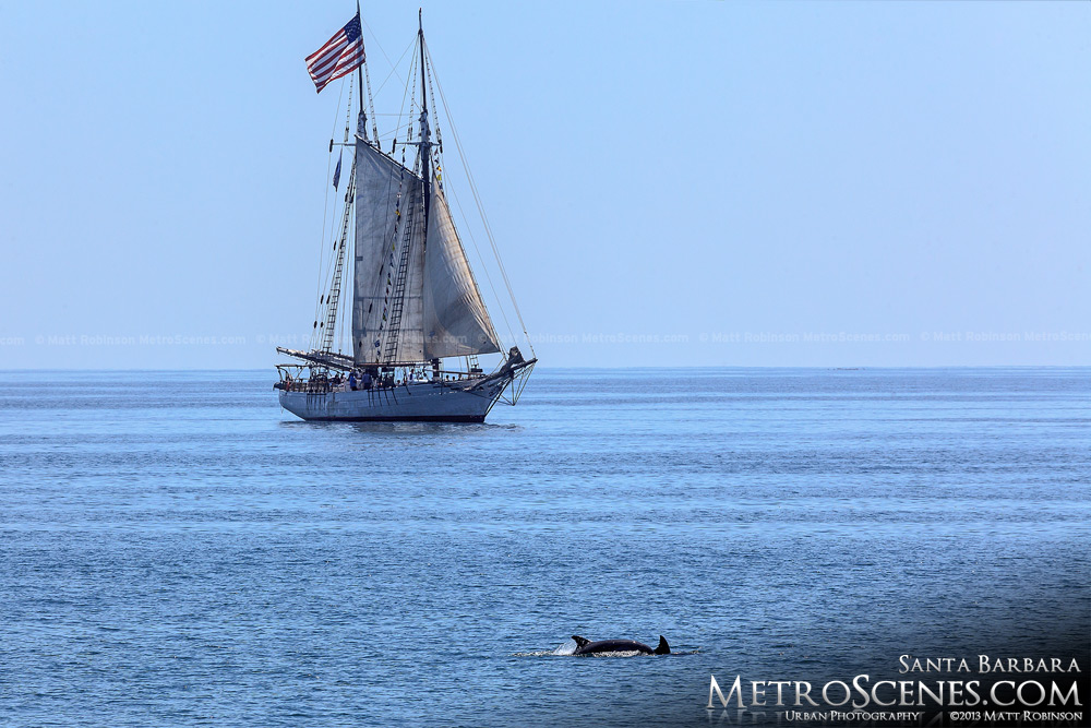 Dolphins and Sailboat in Santa Barbara