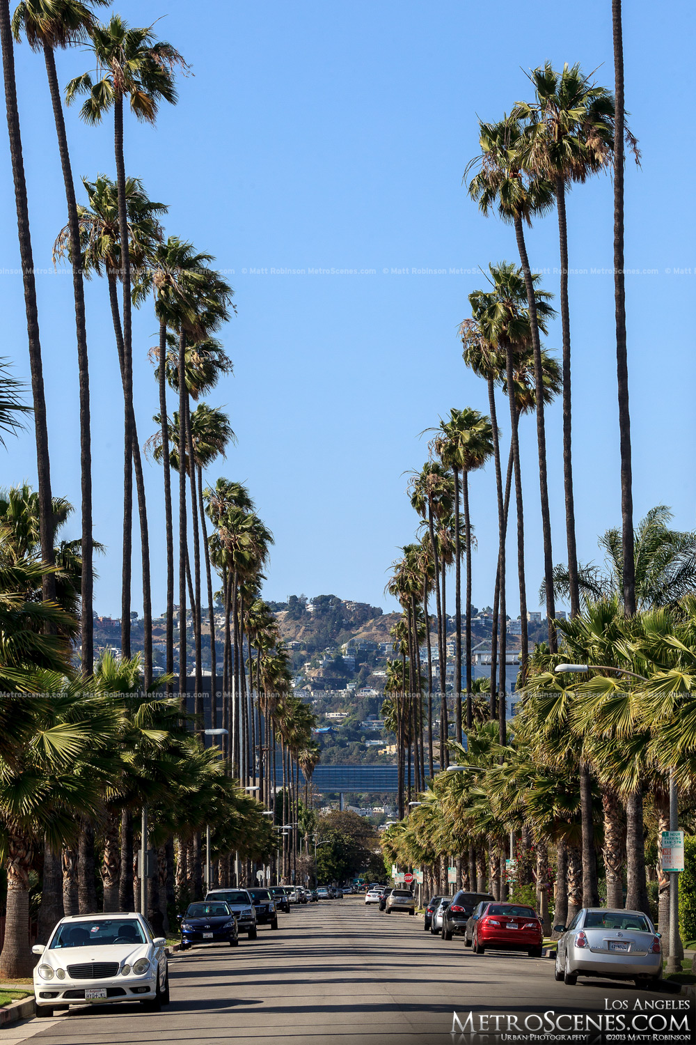 Tall palm tree lined street in LA