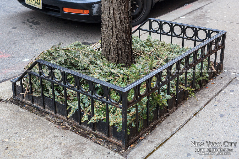 Christmas tree branches reused as mulch - NYC
