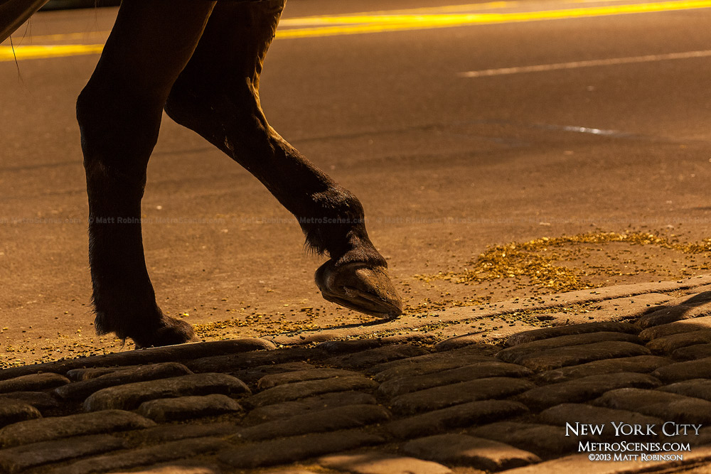 A horse's foot rests on an NYC street curb