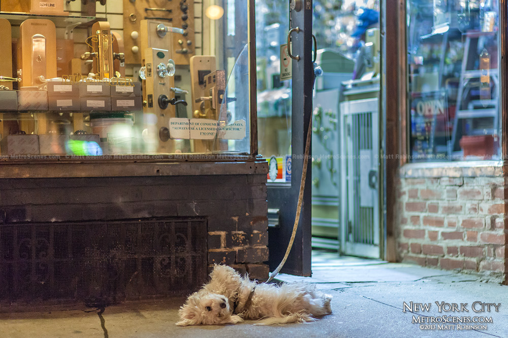 Small dog protects Metropolitan Locksmith on Seventh Avenue