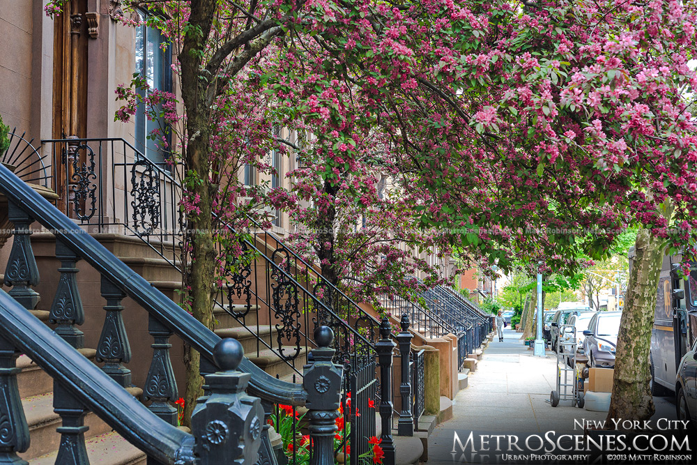 Springtime in Brooklyn, New York