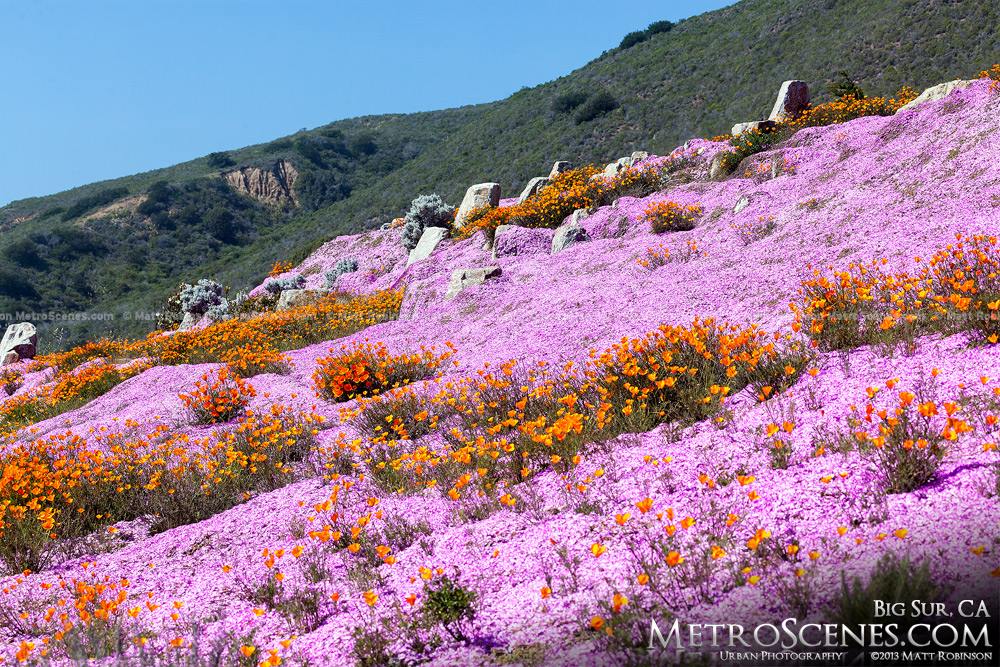 Pink and Orange Flowers in Big Sur