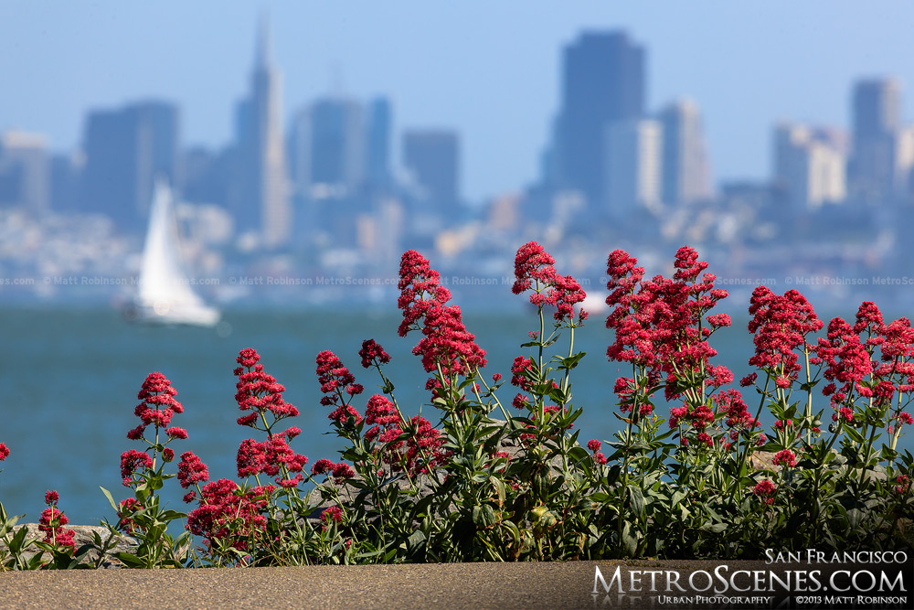 San Francisco skyline with flowers from Sausalito