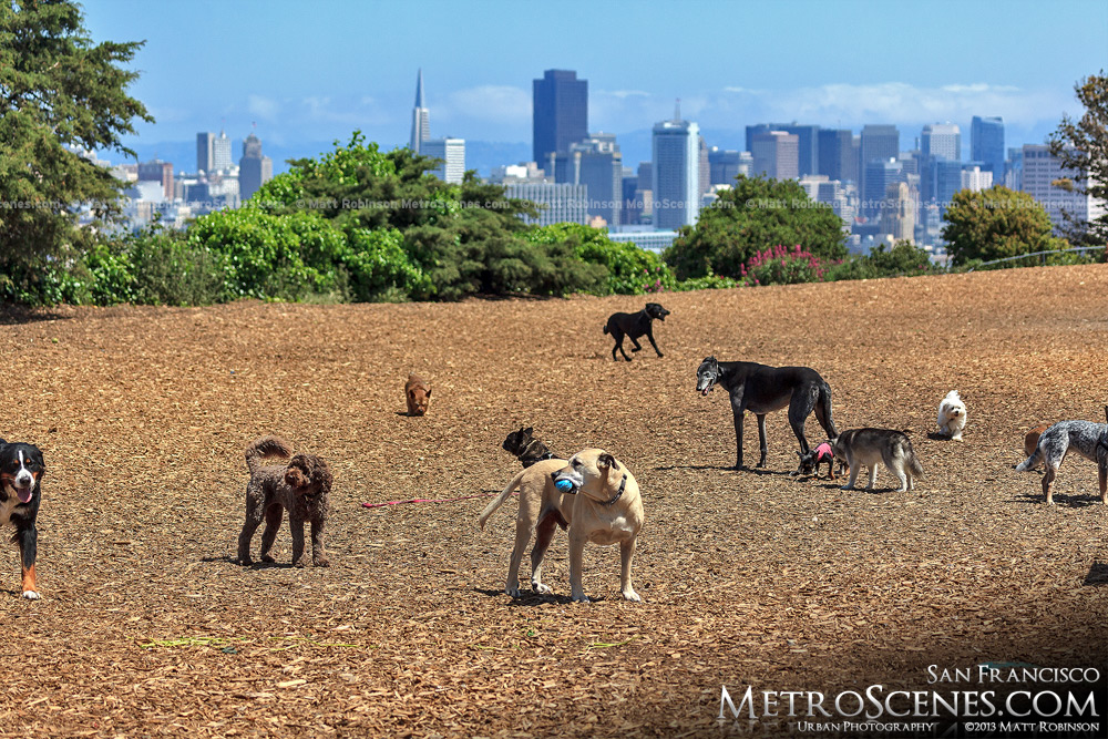 A dog's world in San Francisco