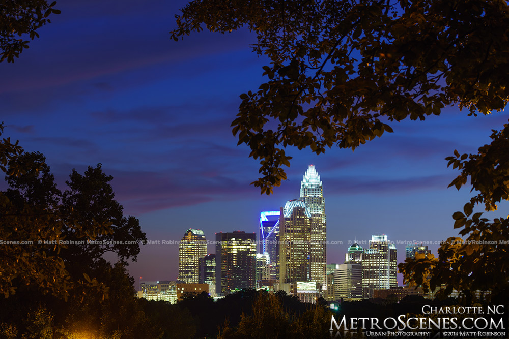 Trees frame the Skyline of Charlotte from Cordelia Park