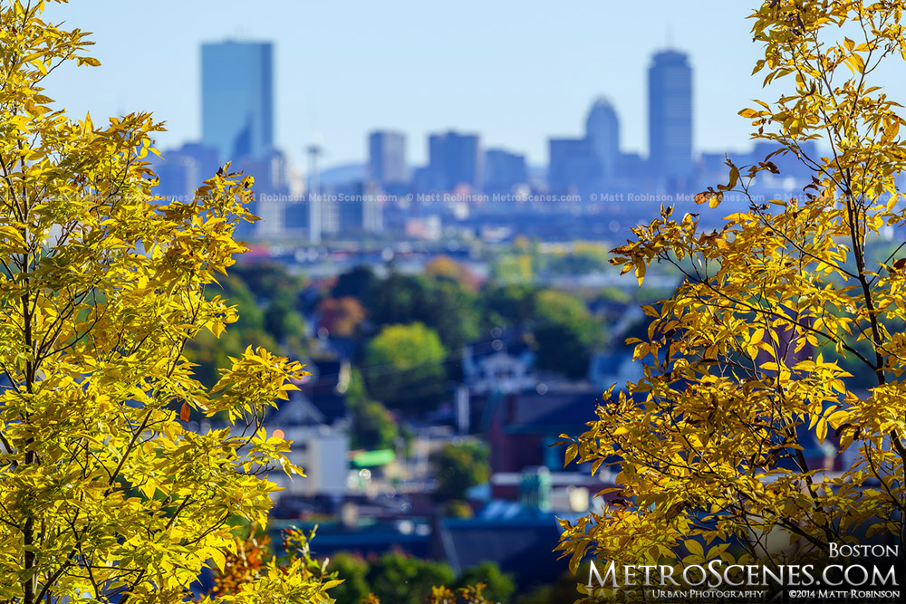Yellow Leaves with Boston Skyline