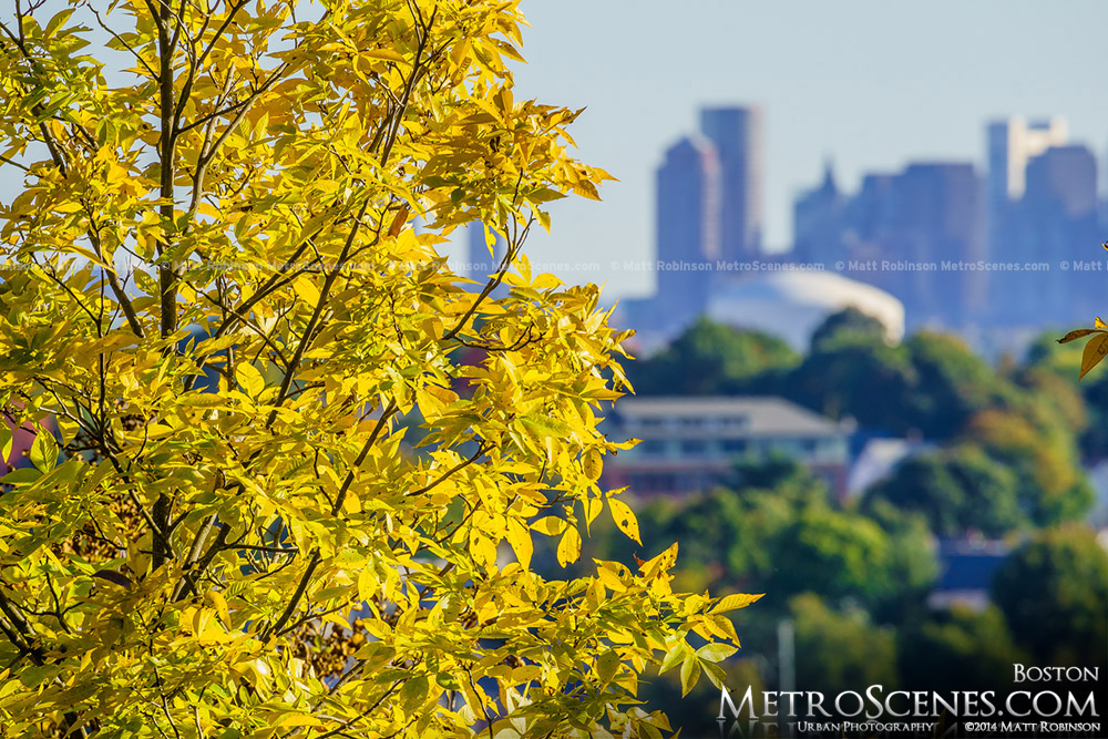 Early Fall colors with a distant Boston