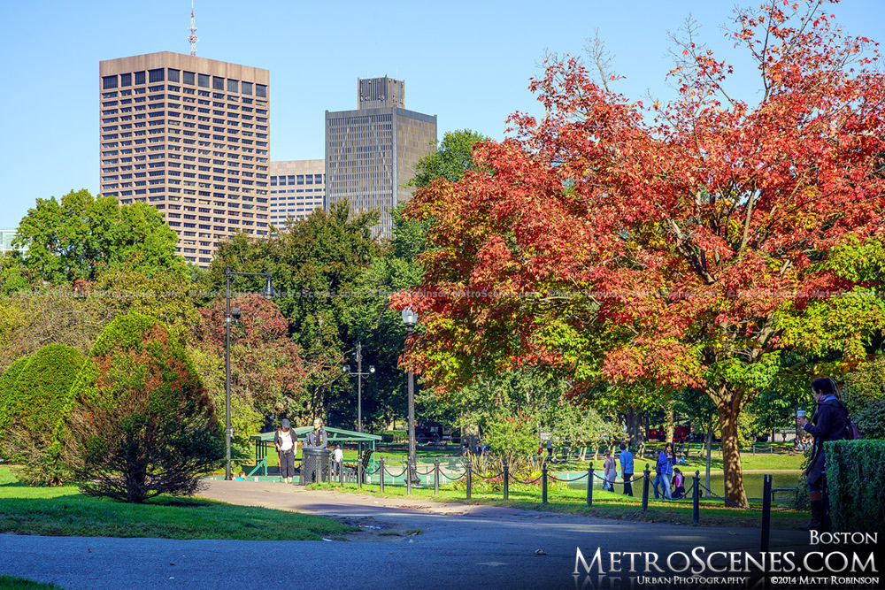 Red leaves in the Boston Public Garden