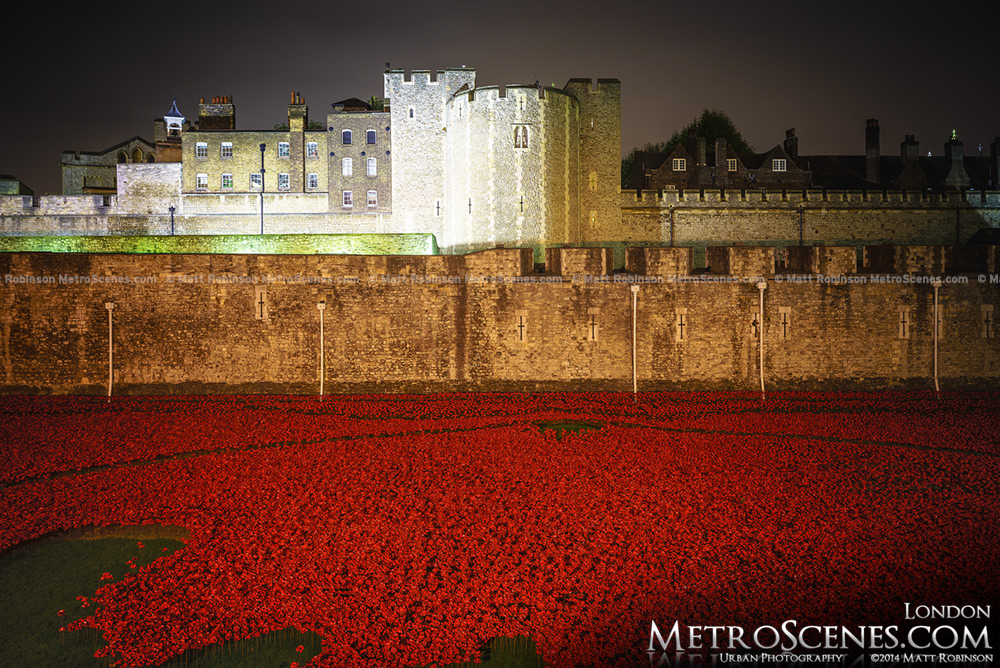 Poppies at night at the Tower of London