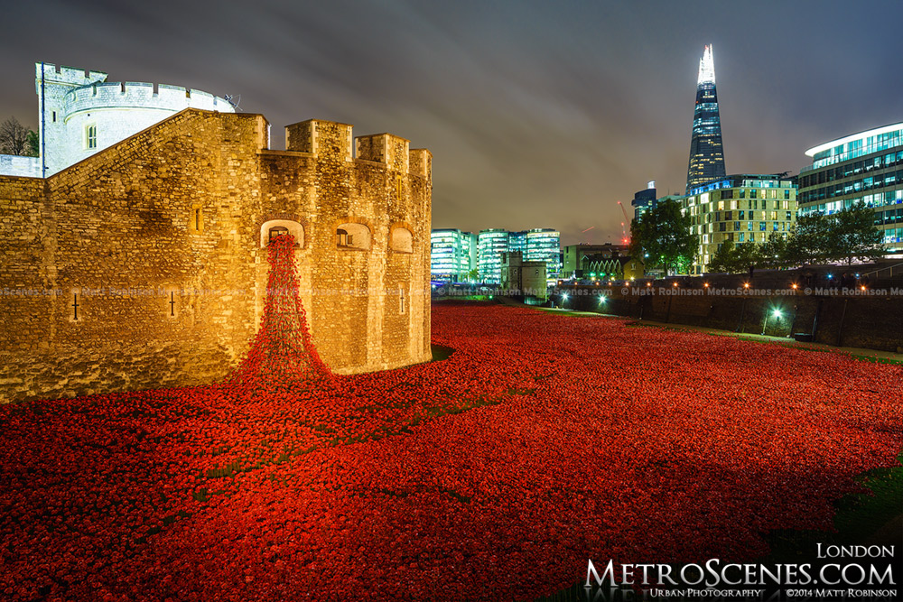 The sea of red poppies at the Tower of London at night with the Shard