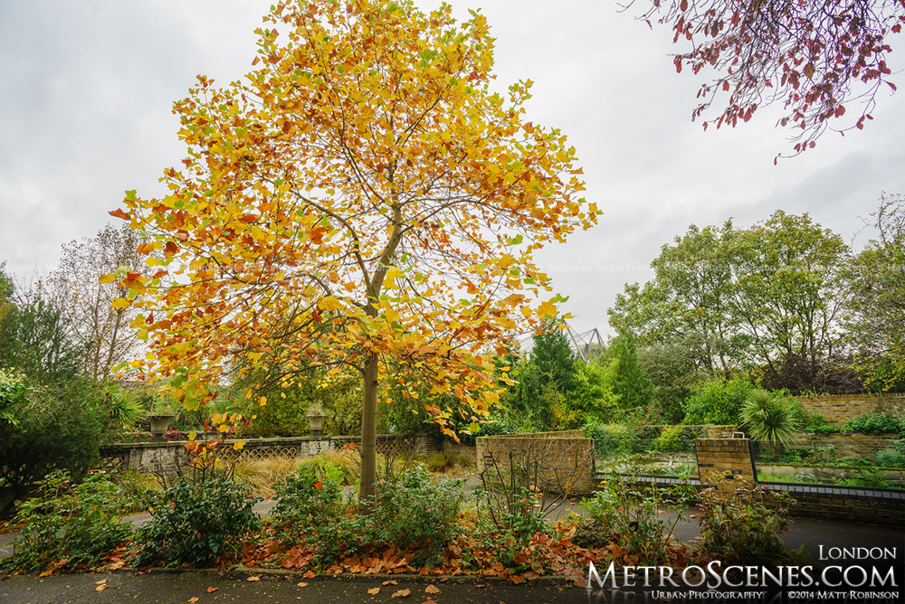 Autumn Colors at the London Zoo