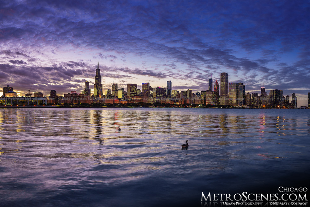 Lakefront Chicago Skyline at sunset with ducks