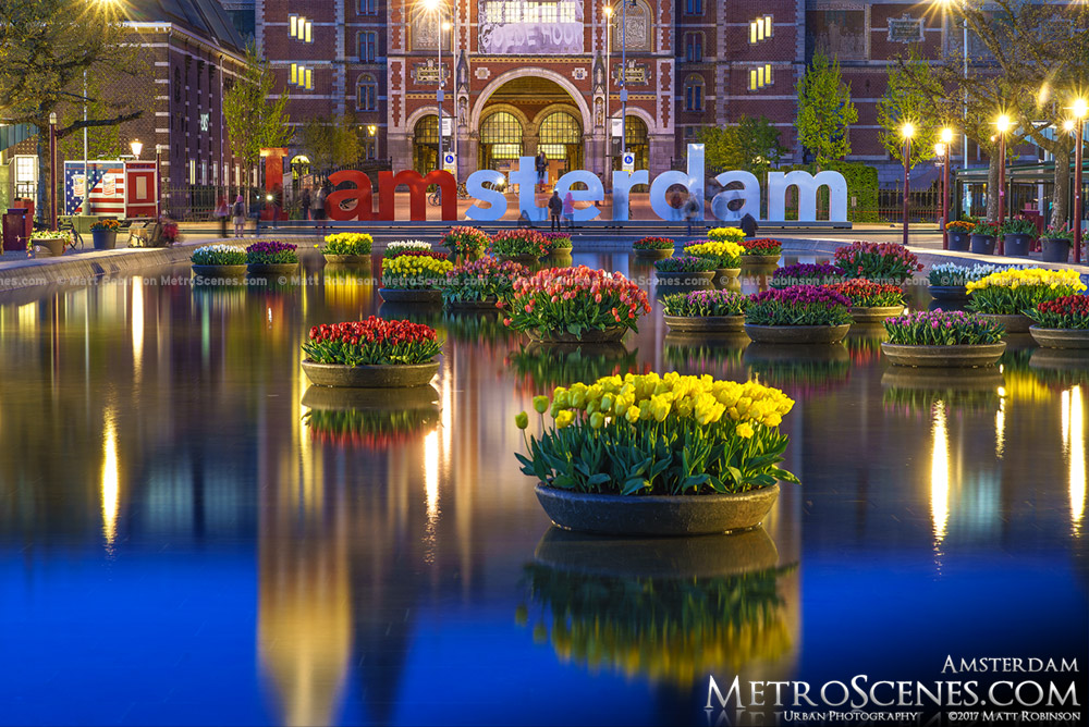 I amsterdam sign at night with tulips reflecting
