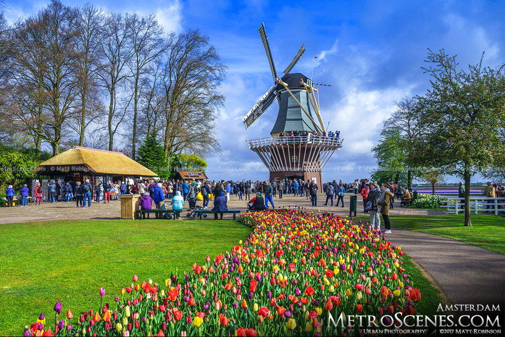 Windmill at Keukenhof with Tulips