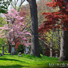 Mt. Auburn Cemetery in the spring