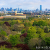 Boston skyline from the Mt. Auburn Cemetery